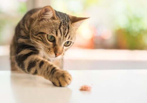 Gatto che tocca oggetto sul tavolo