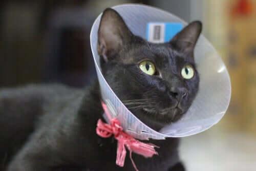 La sterilizzazione del gatto: di cosa si tratta?