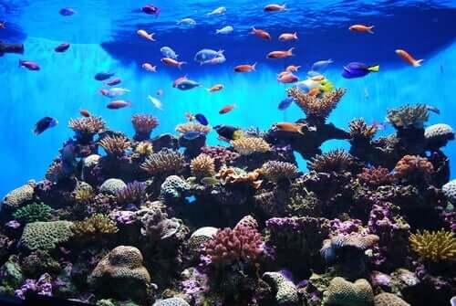 I pesci da acquario più affascinanti