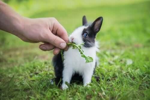 la dieta del coniglio nano