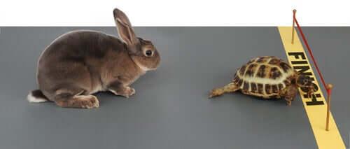 Favole sugli animali lepre e tartaruga gara