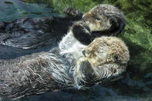 Mammiferi marini che dormono