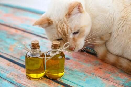 Olio di oliva per i gatti per prevenire i boli di pelo
