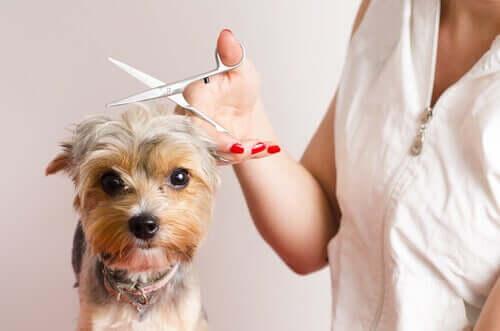 Diventare parrucchiere per cani: 7 consigli