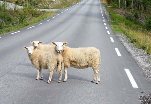 Circolazione degli animali nelle strade pubbliche