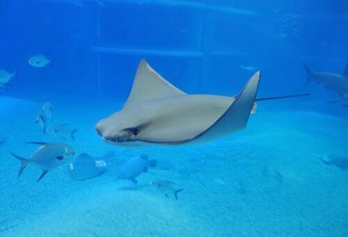 Pesci elettrici: animali incredibili e più comuni di quanto si pensi