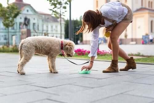 Ragazza che raccoglie escrementi del cane