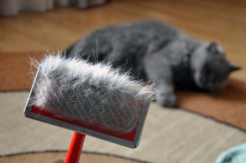 Spazzolare il gatto per prevenire i boli di pelo
