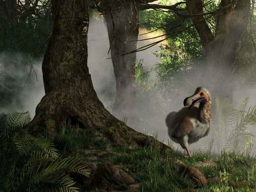 Estinzione del dodo: perché e come è avvenuta?