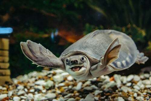 Come prendersi cura di una tartaruga d'acqua
