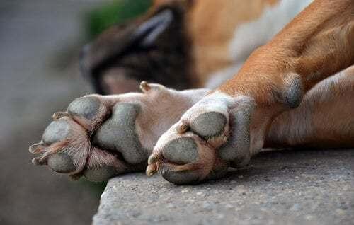 Tipi di lesioni alle zampe dei cani e come intervenire