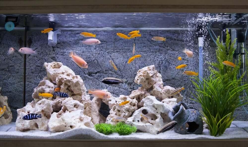 Un pesce che riceve le cure adeguate può vivere molto a lungo