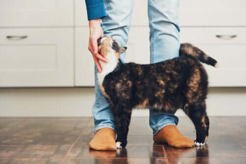 Coccole ad un gatto