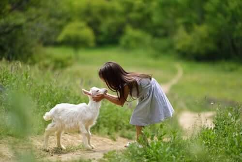 Allevare una capra: 4 cose da sapere