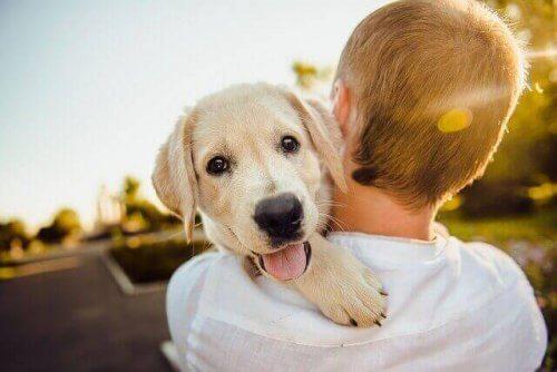 Scopriamo i 5 animali più affettuosi