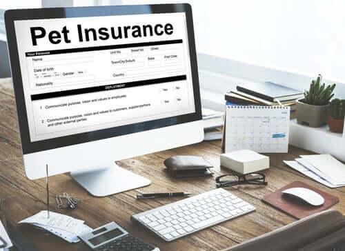 Assicurazioni per animali domestici