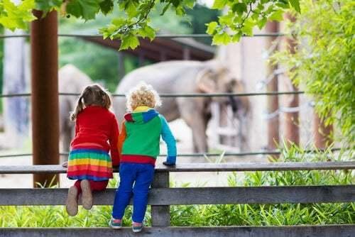 Quali sono le differenze tra uno zoo e un santuario?