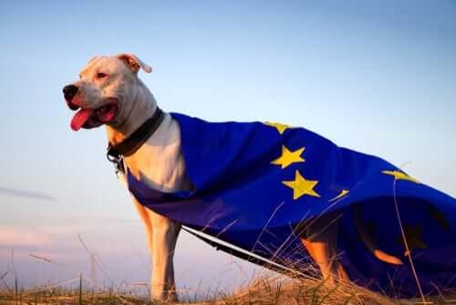 Cane con bandiera dell'unione europea