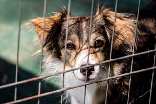 Cane abbandonato dentro la gabbia di un rifugio