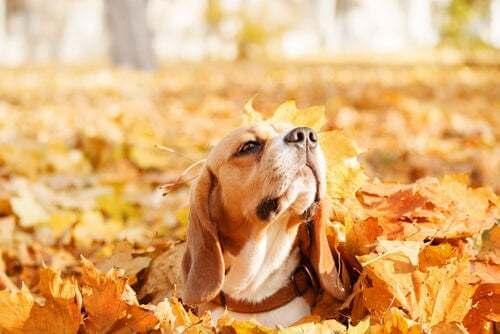 Perché i cani amano giocare con le foglie in autunno?