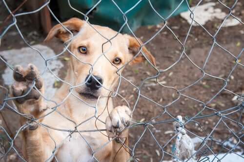 Cane in canile sporgere denuncia per abbandono di animali