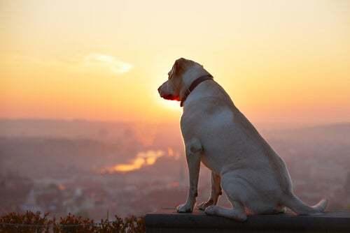 La perdita di un animale domestico è molto dolorosa per i padroni.