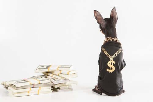 Secondo la legge italiana, gli animali non possono diventare milionari