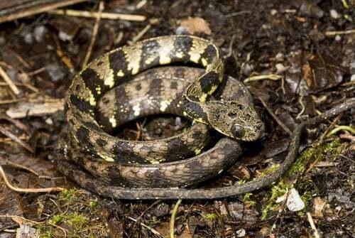 Serpente arrotolato nella foresta