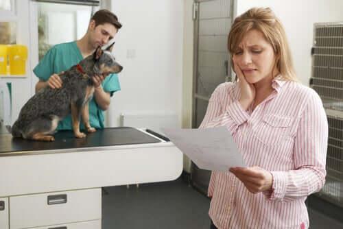 Assicurazioni per animali domestici: servono davvero?