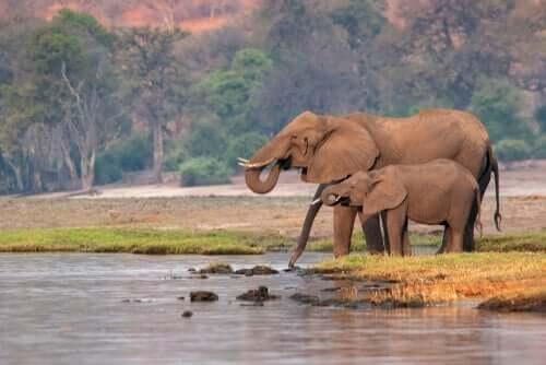 Cosa sono le specie chiave per l'ecosistema?