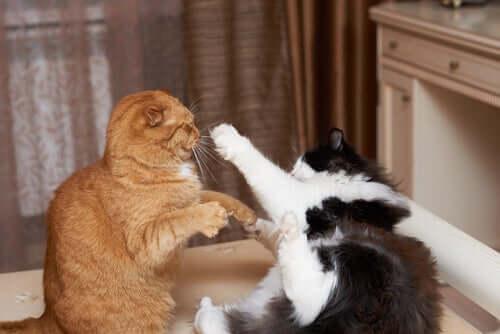 Aggressività nei gatti domestici