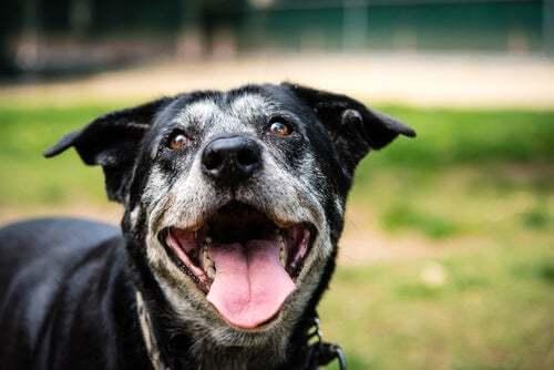 Malattia renale nei cani anziani