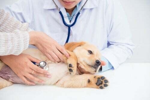 Cause e sintomi delle malattie renali nei cani