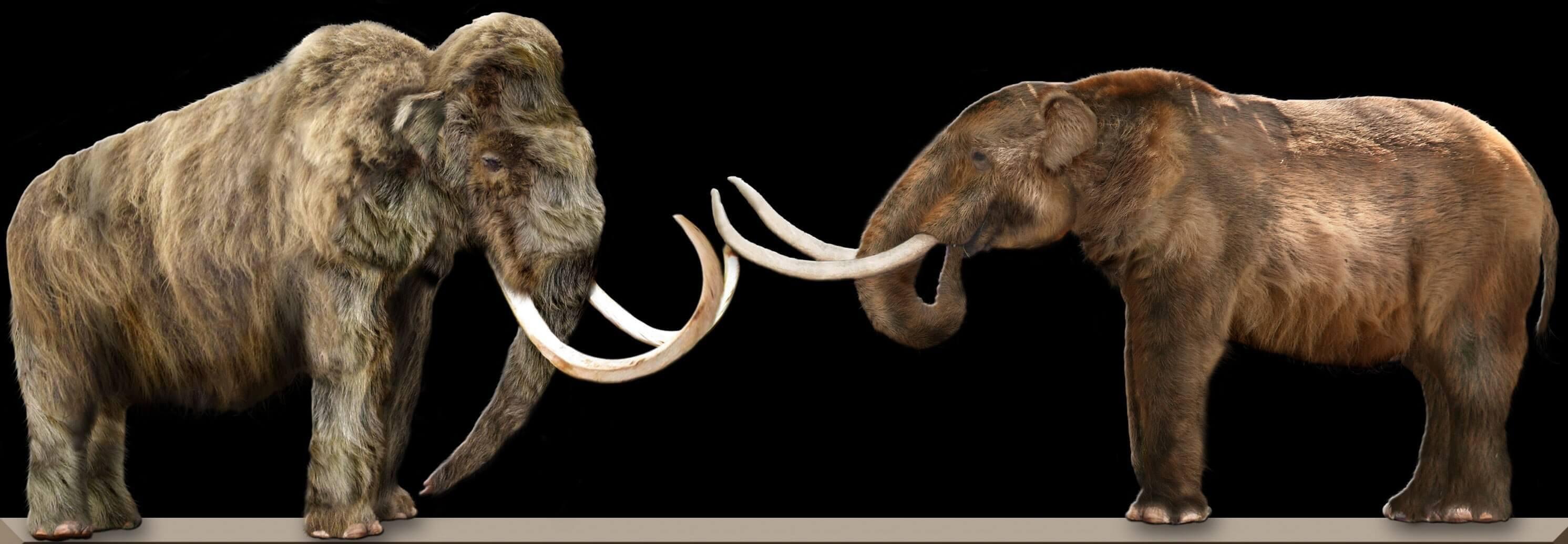 il mastodonte estinto presentava caratteristiche differenti da quelle del mammut