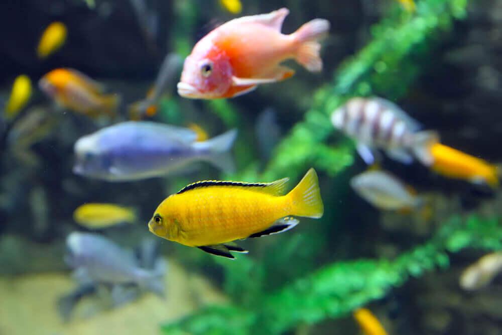 Quanto vivono i pesci in un acquario? La risposta dipende da vari fattori