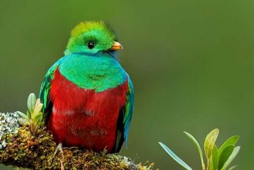 Il quetzal: un bellissimo volatile misterioso