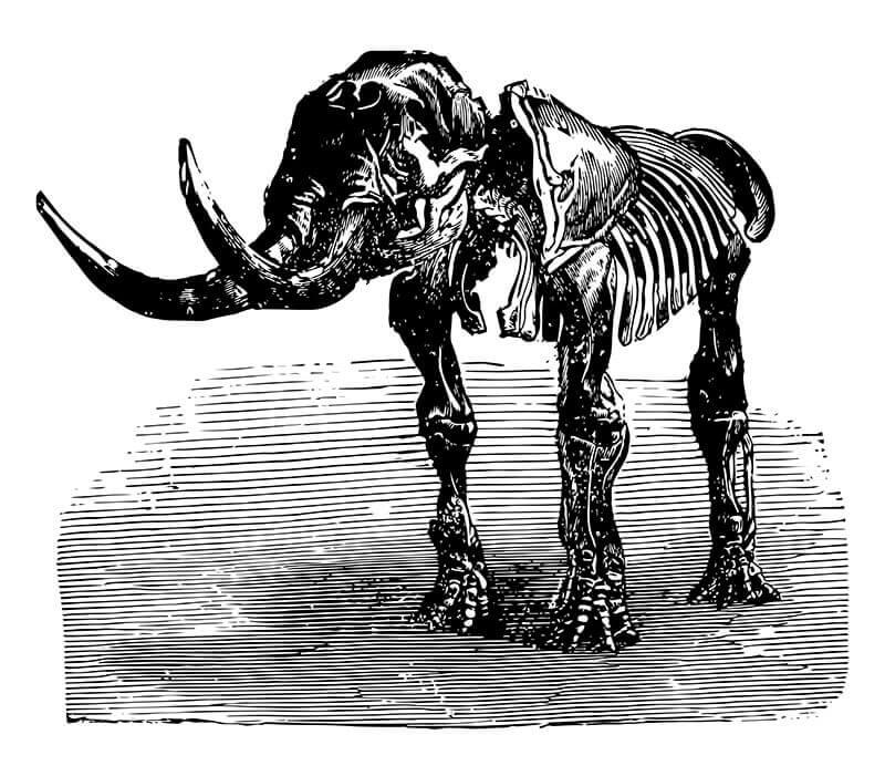 rappresentazione dello scheletro di un mastodonte estinto