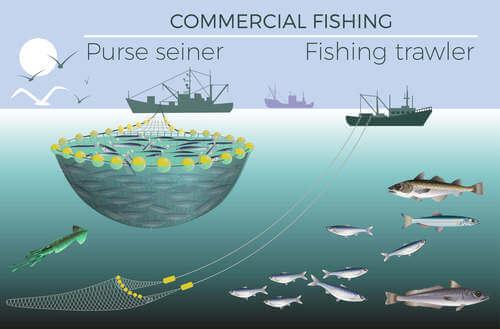 Schema pesca merluzzo