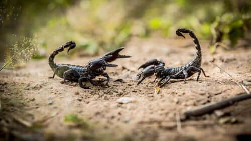 Gli scorpioni: 8 fatti curiosi da conoscere