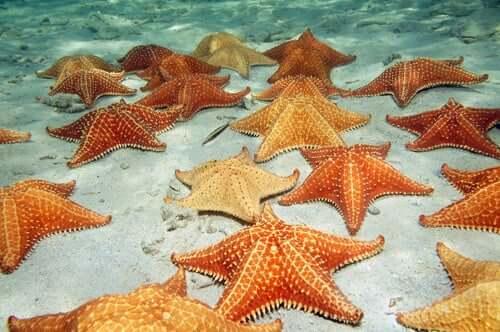 Gruppo di stelle marine sul fondo