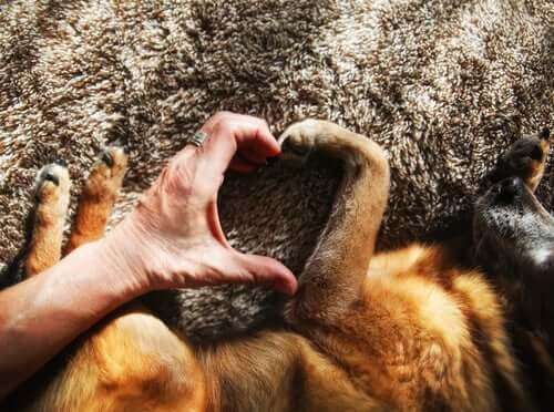 Prendere un cane per migliorare la salute vascolare