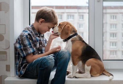 addestrare un beagle