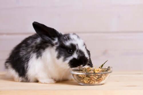 Alimentazione del coniglio: il mangime va offerto come un integratore dell'alimento principale