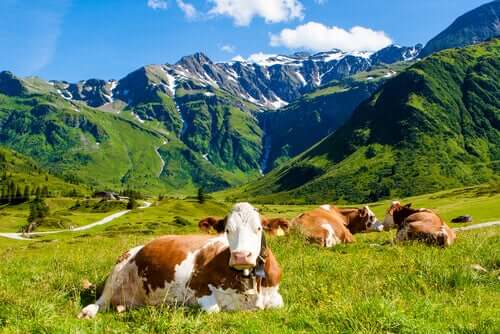 L'allevamento come causa e soluzione dell'impatto ambientale