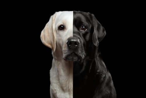 Cani clonati: è lecito clonare un cane che amiamo?