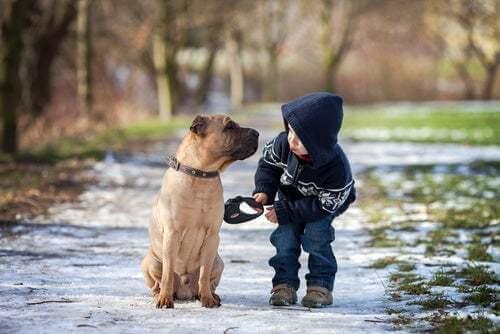 Quali sono gli animali domestici ideali per i bambini?