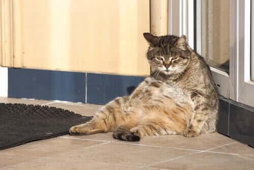 Le attività quotidiane dei gatti: ecco cosa fanno i mici tutto il giorno