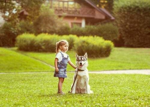 Cane animali domestici ideali per i bambini