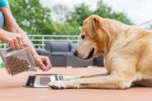 Come calcolare la quantità di cibo da dare al cane