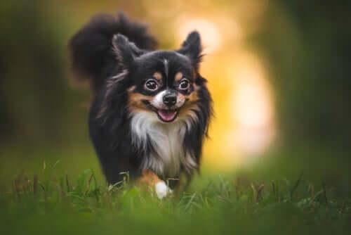 Consigli per proteggere il vostro cane dalle punture di insetto